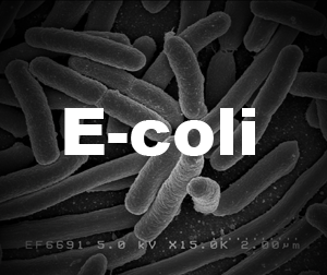 E-coli in drinking water